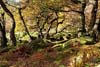 Photograph from Padley Gorge in Derbyshire